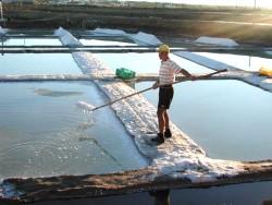 Meersalzgewinnung Fleur de sel